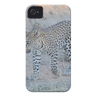Coque iPhone 4 Marche de petit animal de léopard