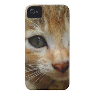 Coque iPhone 4 Regardez-moi ! Chaton tigered par bonbon