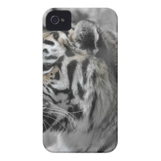 Coque iPhone 4 Tigre blanc nature animal sauvage
