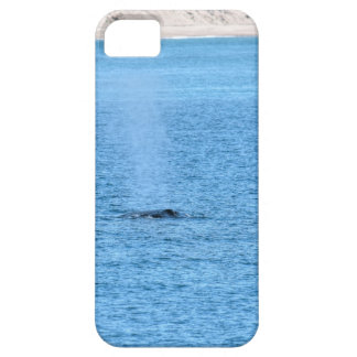 COQUE iPhone 5 BALEINE DE BOSSE MACKAY QUEENSLAND AUSTRALIE