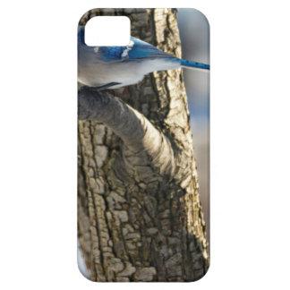 Coque iPhone 5 Case-Mate Geai bleu