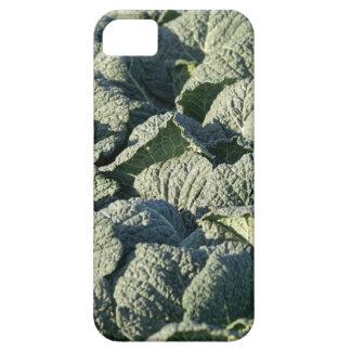 Coque iPhone 5 Case-Mate Plantes de chou de Milan dans un domaine