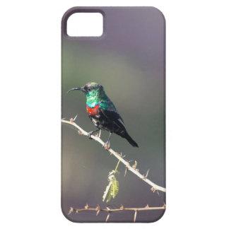 Coque iPhone 5 Case-Mate Sunbird brillant (habessinicus de Cinnyris)