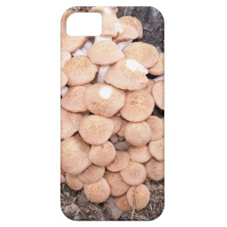 Coque iPhone 5 champignons de miel ringless