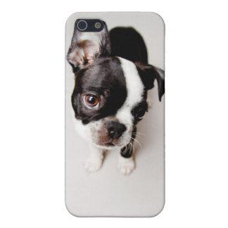 Coque iPhone 5 Chiot d'Edison Boston Terrier