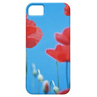 Coque iPhone 5 Coquelicots de Provence