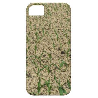 Coque iPhone 5 Gisement de maïs de maïs vert à la partie
