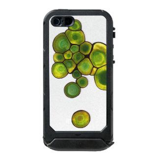Coque iPhone 5 Incipio ATLAS ID™ Art abstrait de cellules vertes