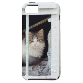 Coque iPhone 5 Le chat sans abri observe la rue