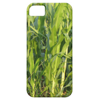 Coque iPhone 5 Les plantes de maïs vert se développent en été