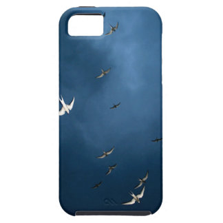 Coque iPhone 5 Miscellaneous - Arctic Tern & Blue Sky Pattern