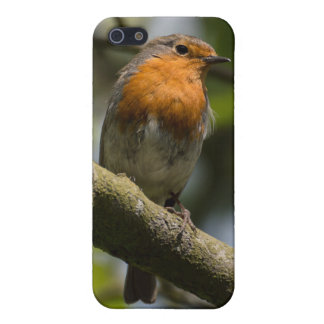 Coque iPhone 5 Robin