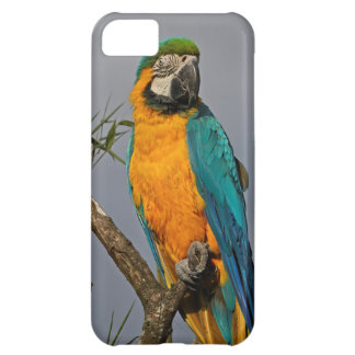 Coque iPhone 5C Caisse bleue de l'iPhone 5 de Goldie