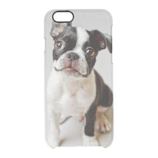 Coque iPhone 6/6S Chiot de chien de Boston Terrier