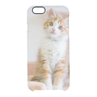 Coque iPhone 6/6S Kitty observé par bleu doux