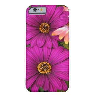 Coque iPhone 6 Barely There Belles marguerites roses