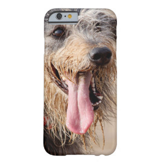 Coque iPhone 6 Barely There Chien heureux sur une plage