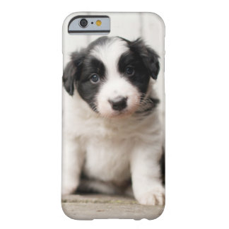 Coque iPhone 6 Barely There Chiot de border collie
