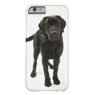 Coque iPhone 6 Barely There Labrador retriever noir