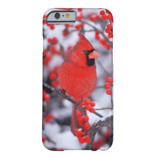 Coque iPhone 6 Barely There Mâle cardinal du nord, hiver, IL