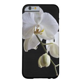Coque iPhone 6 Barely There Orchidée blanche de Phalaenopsis sur le noir