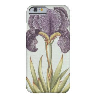 Coque iPhone 6 Barely There Trois variétés d'iris imberbes de Rhizomatous