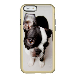 Coque iPhone 6 Incipio Feather® Shine Chiot d'Edison Boston Terrier