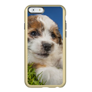 Coque iPhone 6 Incipio Feather® Shine Chiot mignon (Shitzu)