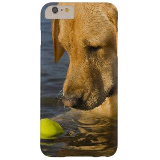 Coque iPhone 6 Plus Barely There Labrador jaune avec de la balle de tennis dans