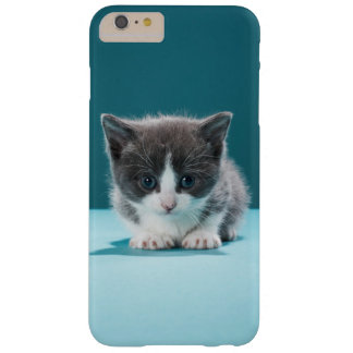 Coque iPhone 6 Plus Barely There Petit chaton