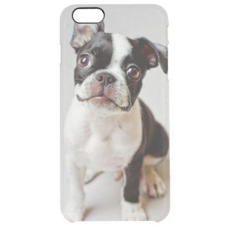 Coque iPhone 6 Plus Chiot de chien de Boston Terrier