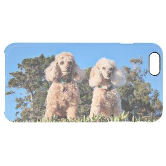 Coque iPhone 6 Plus Épuisement - caniches - Romeo Remy