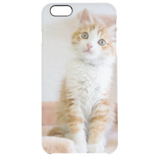 Coque iPhone 6 Plus Kitty observé par bleu doux