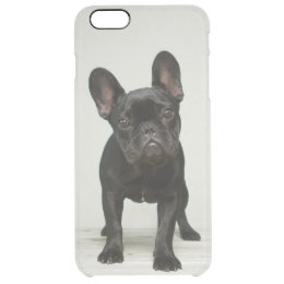 coque iphone 6 bouledogue