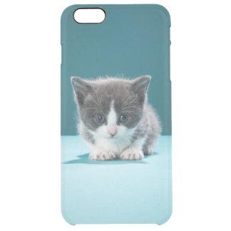 Coque iPhone 6 Plus Petit chaton