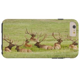 Coque iPhone 6 Plus Tough Les Etats-Unis, Utah, groupe d'élans de taureau
