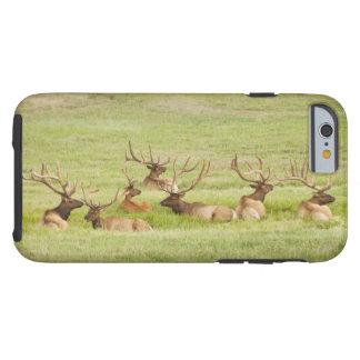 Coque iPhone 6 Tough Les Etats-Unis, Utah, groupe d'élans de taureau