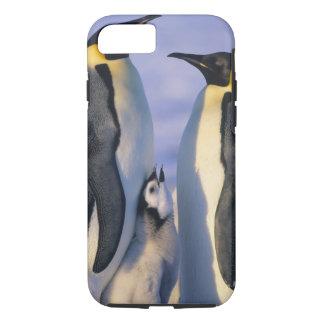 Coque iPhone 7 Adultes de pingouins d'empereur (forsteri