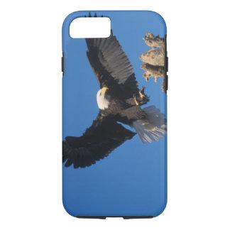 Coque iPhone 7 aigle chauve, leuccocephalus de Haliaeetus,