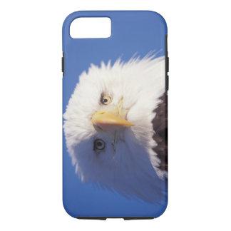 Coque iPhone 7 aigle chauve, leucocephalus de Haliaeetus, tir
