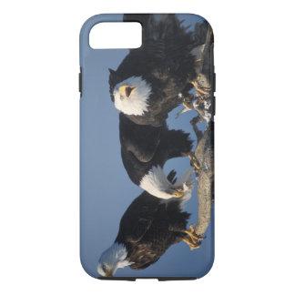 Coque iPhone 7 aigles chauves, leuccocephalus de Haliaeetus,