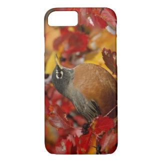 Coque iPhone 7 Américain masculin Robin dans l'aubépine noire 2
