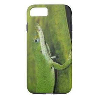 Coque iPhone 7 Anole vert, carolinensis d'Anolis, adulte sur la