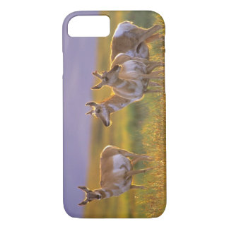 Coque iPhone 7 Antilope de Pronghorn au Montana