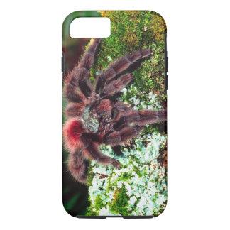 Coque iPhone 7 Araignée d'arbre de la Martinique, Avicularia