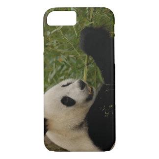 Coque iPhone 7 Bébé de panda géant mangeant le bambou (Ailuropoda