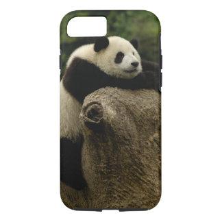Coque iPhone 7 Bébé de panda géant (melanoleuca d'Ailuropoda)