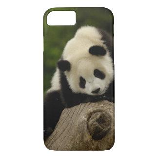 Coque iPhone 7 Bébé de panda géant (melanoleuca d'Ailuropoda) 2