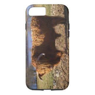 Coque iPhone 7 Bétail des montagnes Taureau, Ecosse