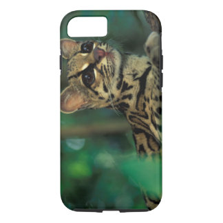 Coque iPhone 7 CA, Panama central, Soberania NP, Margay
